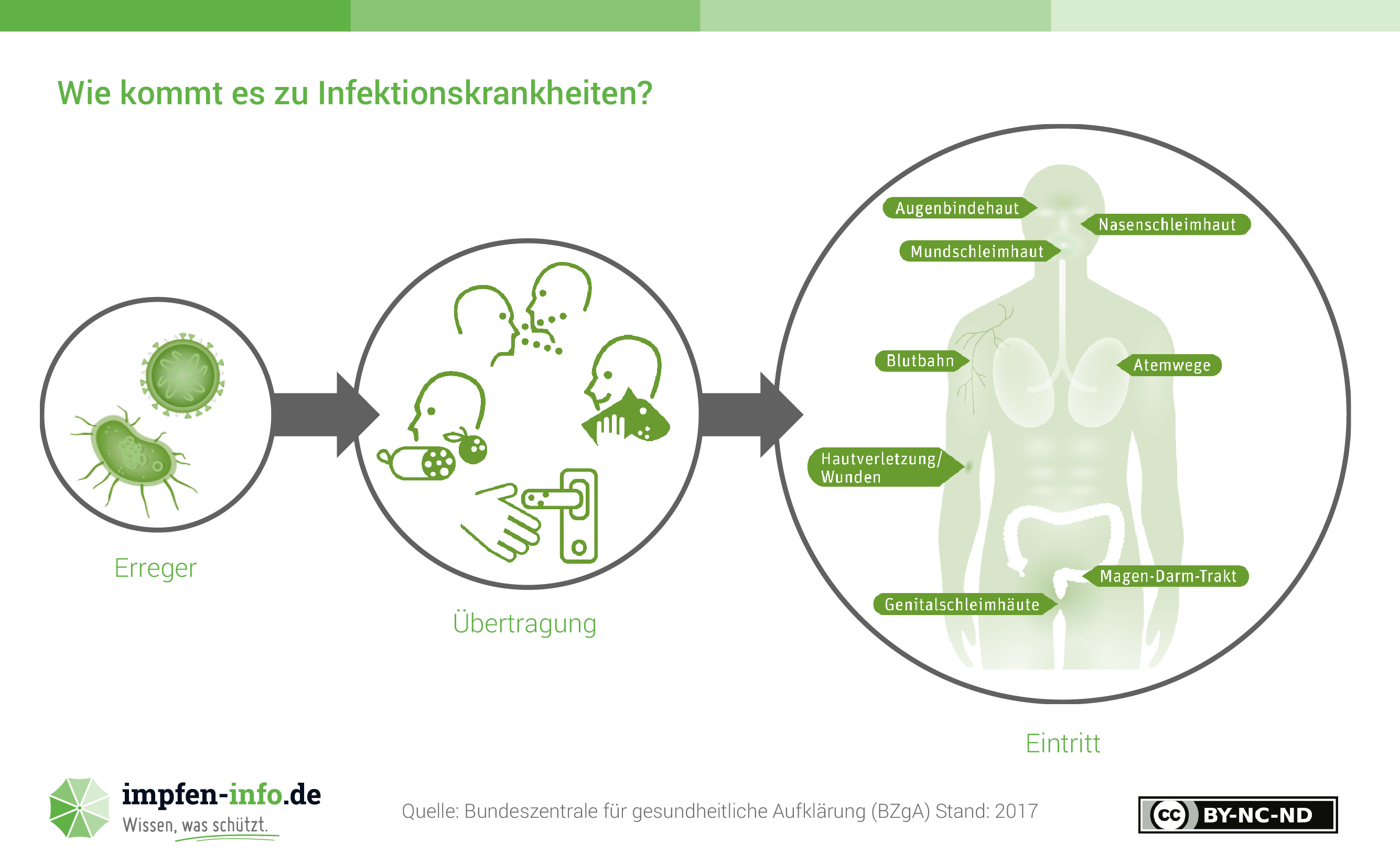 Gemütlich Darm Trakt Bilder - Physiologie Von Menschlichen ...